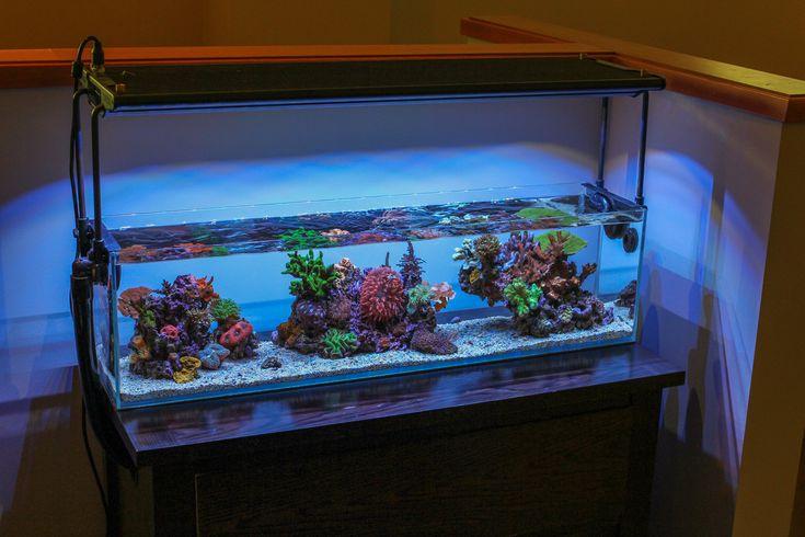 3 foot office nano reef2reef saltwater and reef aquarium for Aquarium recifal nano