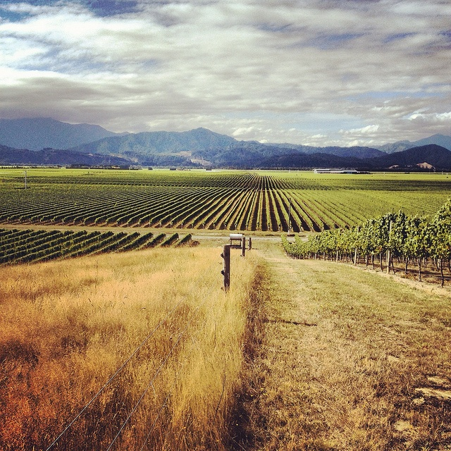 What a stunning spot - Strip Block Vineyard in the Wairau Valley. Produces some lovely Pinot Noir