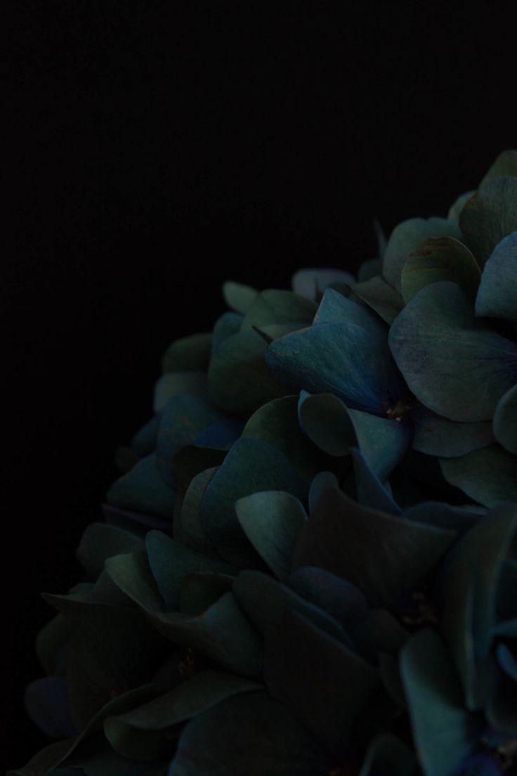Black | 黒 | Kuro | Nero | Noir | Preto | Ebony | Sable | Onyx | Charcoal | Obsidian | Jet | Raven | Color | Texture | Pattern | Styling | Petals