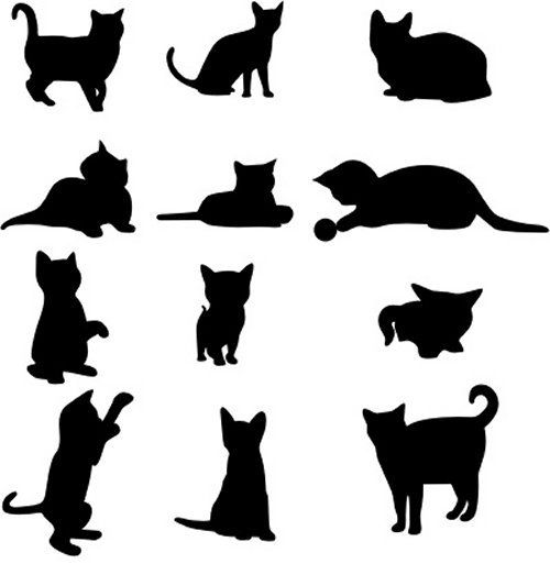 Cats in Silhouette