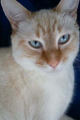 Blonde Cat Nude Photos 57