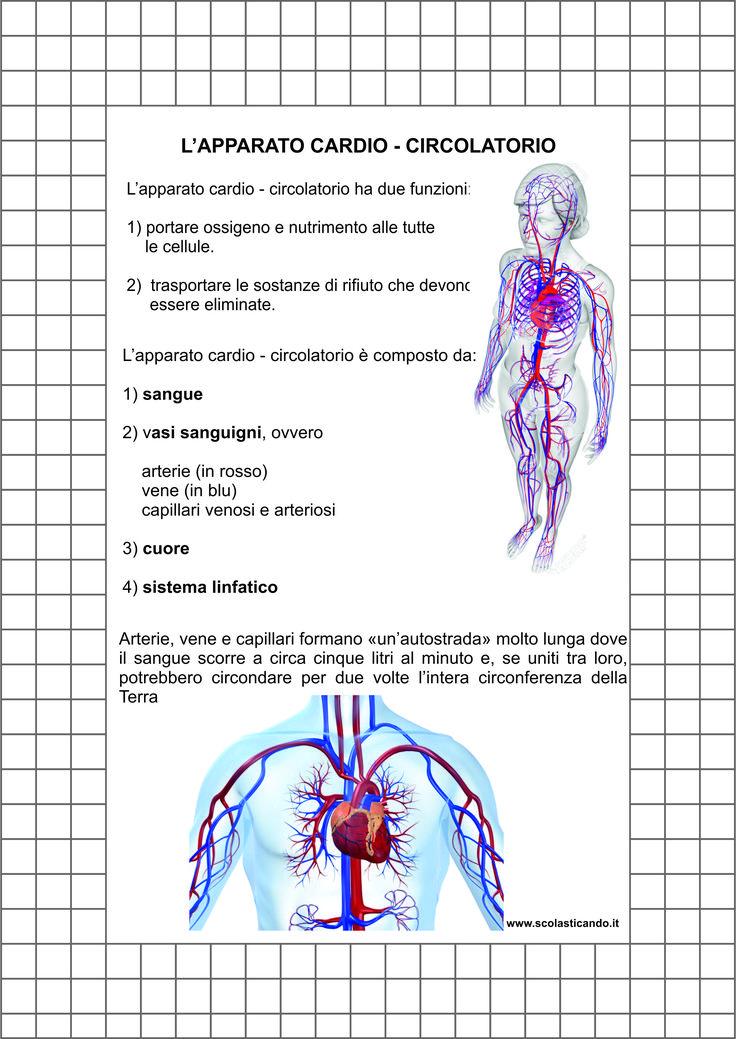 Composizione dell'apparato circolatorio