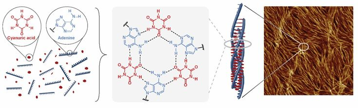 Cyanuric acid is commonly used to stabilize chlorine in pools. Researchers have found that this molecule can also be used to coax DNA into forming a brand new structure: a triple helix. They envisage a variety of applications from medicinal chemistry to tissue engineering and materials science