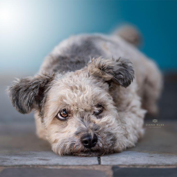 Hundefotografie Im Markischen Kreis Und Nrw Hundefotografie Hunde Fotos Hundefotos