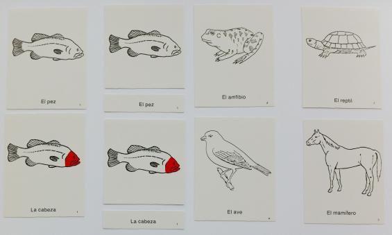 66 mejores imágenes de Montessori Zoología en Pinterest