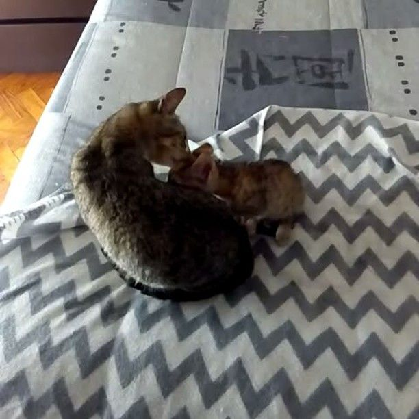 """130 Gostos, 4 Comentários - Bruna Raposo (@brunahh_s2) no Instagram: """"Quem diria q estas gatas à 5 dias atrás se odiavam.... Parecem bastante amigas... Q fofas.. #cat…"""""""