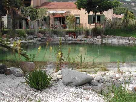 247 Best Images About Piscina Biologica On Pinterest Natural Pond Backyard Ponds And Natural