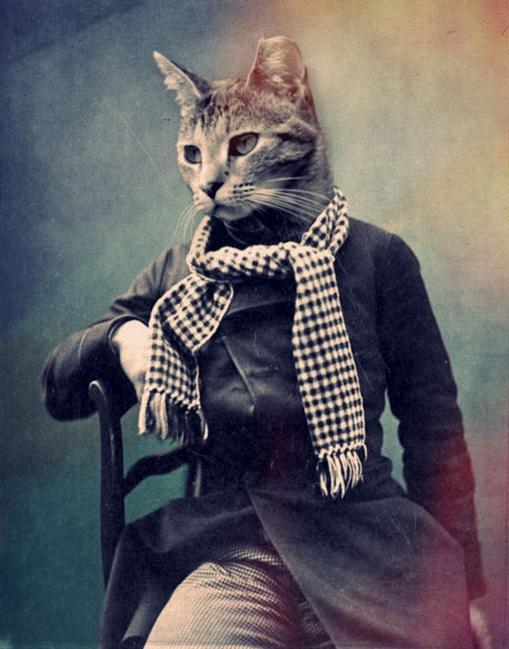 Cat in Scarf poster