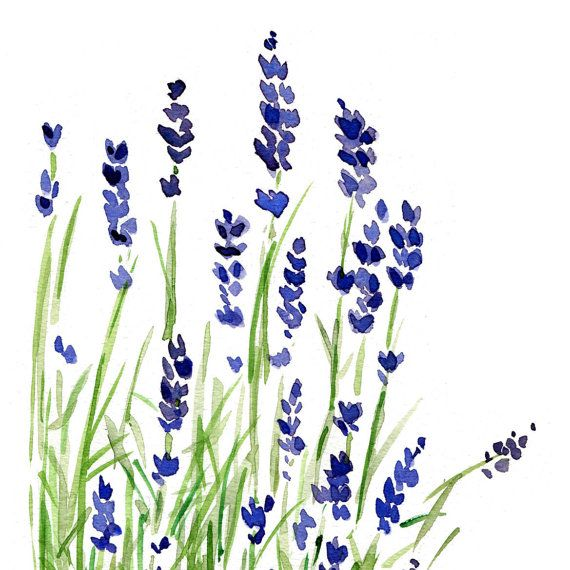 Lavender plant art print of original watercolor by TheJoyofColor