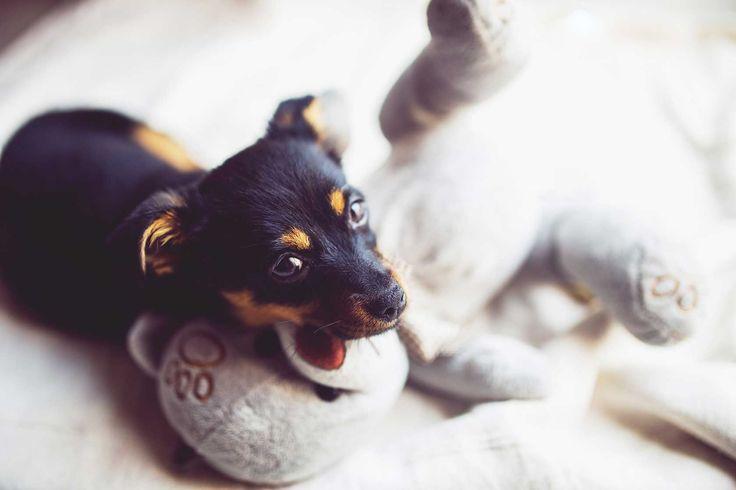 Du willst deinen Hund stubenrein bekommen? Das sind die 5 wichtigsten Tipps gegen unnötigen Pieselfrust!