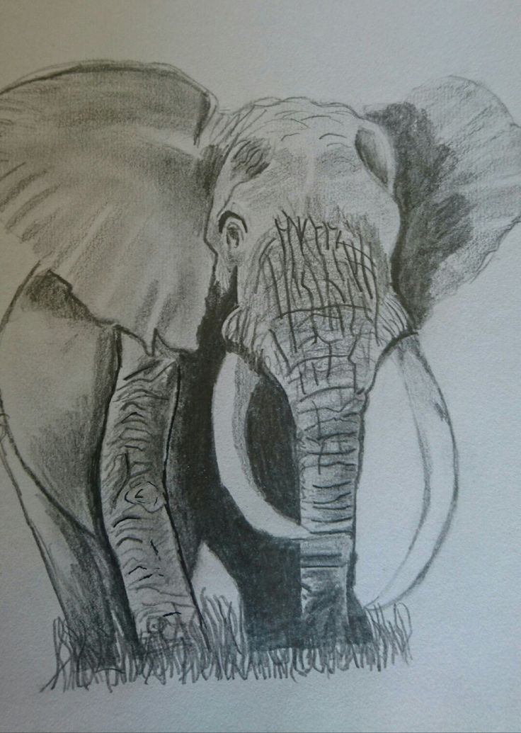 Drawing an African Elephant!