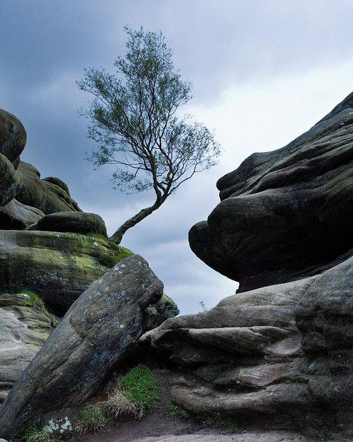 Brimham Rocks by Robert Seber