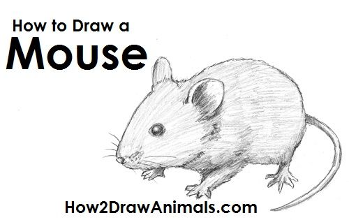 http://www.how2drawanimals.com/images/Mouse/how-to-draw-mouse.jpg