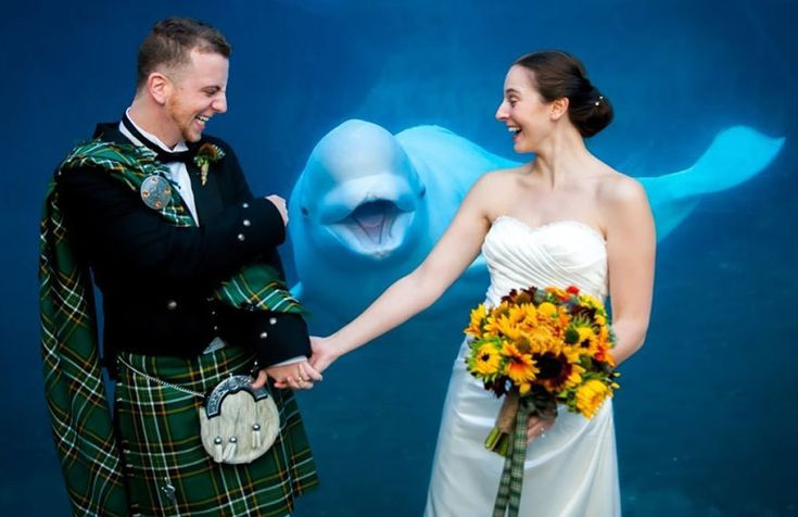 Under the Sea Love - The Greatest Animal Photobombs of All Time - Photos