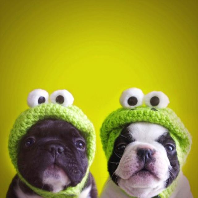 Crochet Hats! For dogs lol!