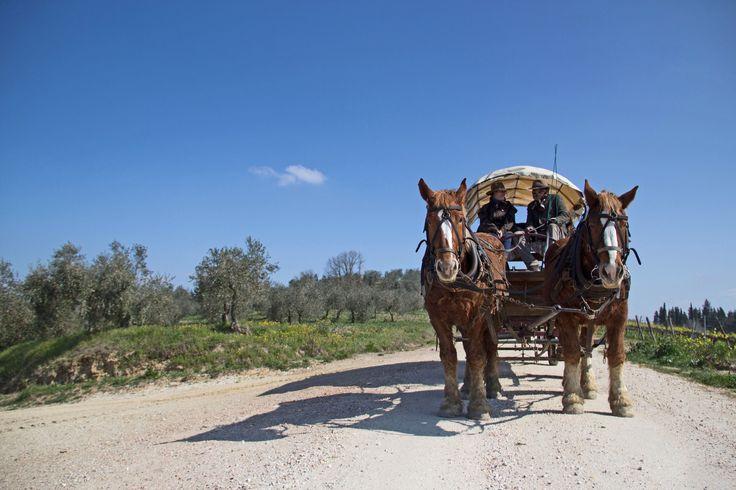 "Fra le attività pomeridiane della scuola, l'imperdibile Tour del Chianti in carrozza del pacchetto ""Scoprendo la Toscana"":  http://www.lolivoitaliano.it/it/portfolio/scoprendo-la-toscana  The tour of Chianti on an old fashion horse-drawn wagon: one our favourite afternoon activities of our our package ""Discovering Tuscany""  http://www.lolivoitaliano.it/en/portfolio/discovering-tuscany/"