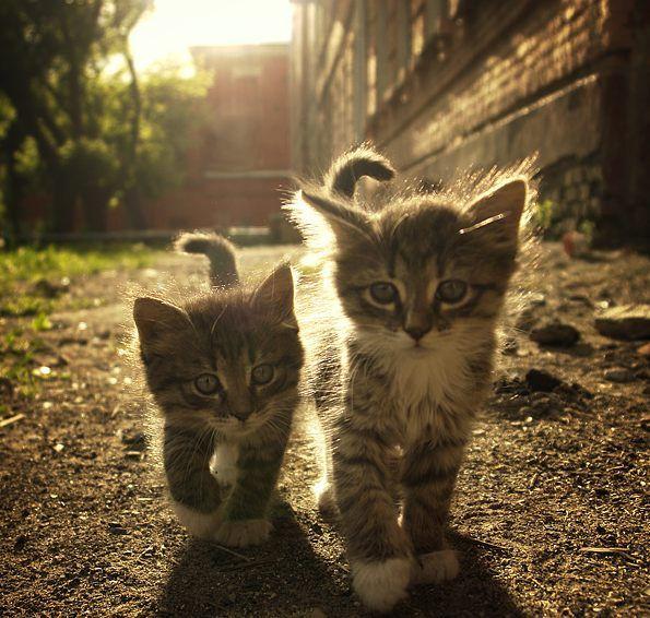 <3Kitty Cats, Walks, Best Friends, Funny Cats, Cute Kitty, Baby Kittens, Big Brothers, Kittycat, Animal