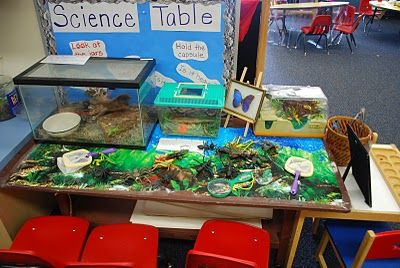 Create a museum in your classroom!