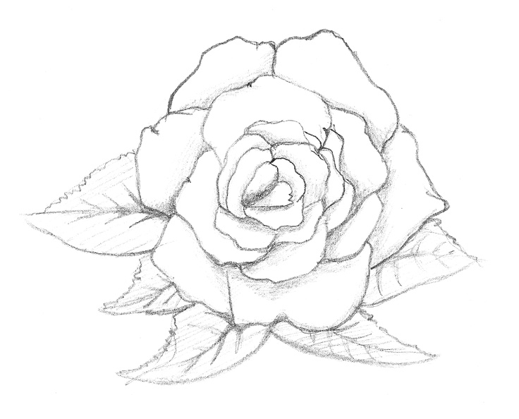 92 best Drawings of Flowers images on Pinterest Draw Drawing