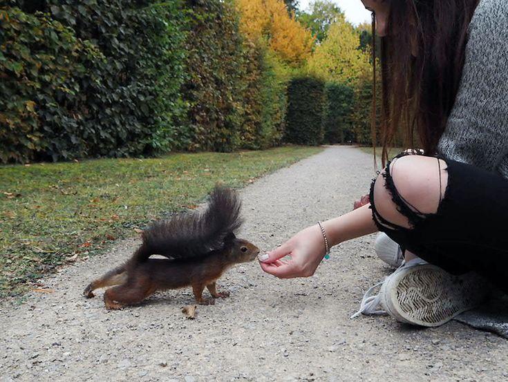 www.sprinzeminze.com - Eichhörnchen füttern squirrel Schönbrunn Tiergarten Zoo Wien