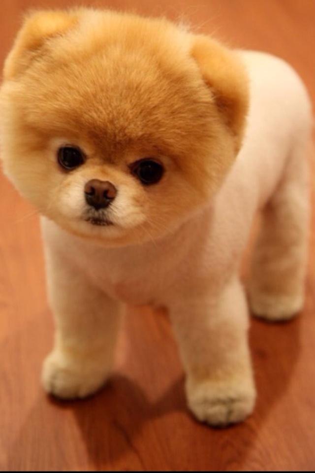 Small Body And Big Head Dog Teddy Bear