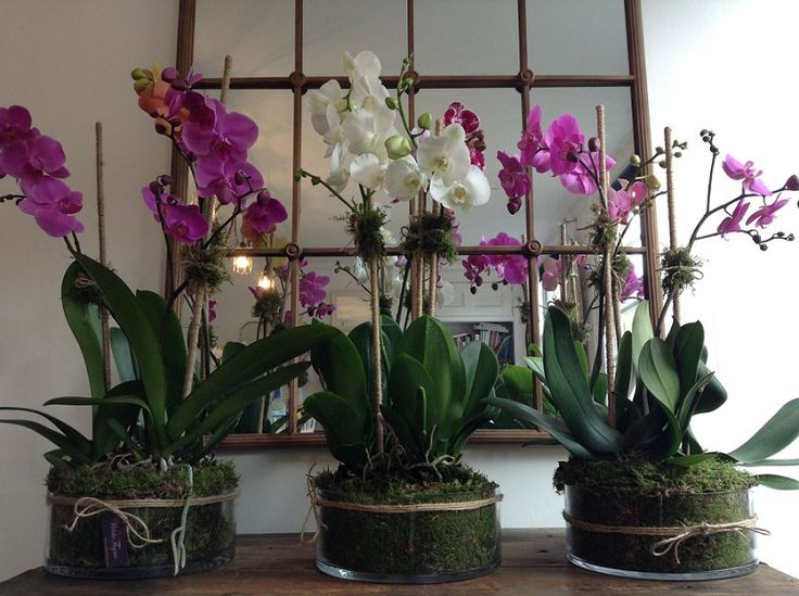 October Career Course - Week One: Planted Orchids...it's where the journey begins. www.tallulahroseflowers.com