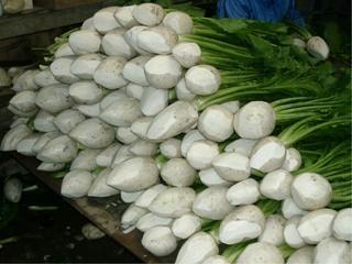面取りされ積み上げられたすぐき菜 収穫されたすぐき菜は「すぐき」に加工されます。 原料はすぐき菜と塩だけで乳酸発酵させます。