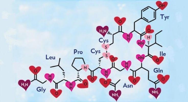 Oxitocina, la hormona de amor y la felicidad | lamenteesmaravillosa.com