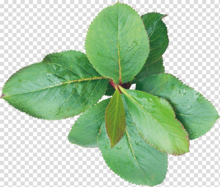 Green Leaf Png Watercolor Splash Leaf Texture Green Leaves