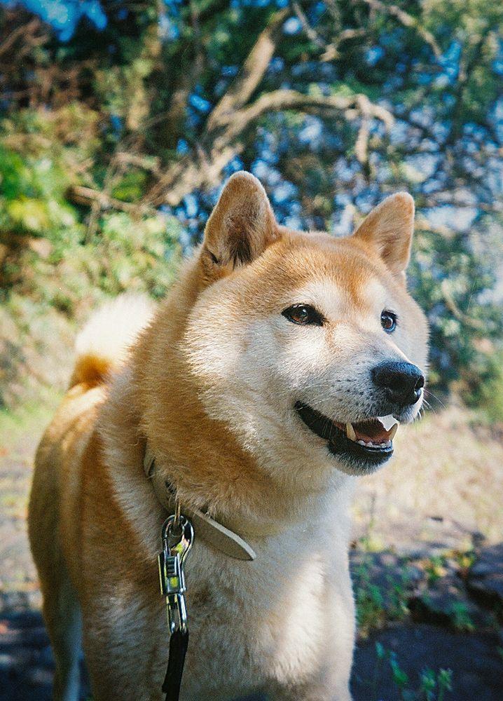 どんな状況でも犬は犬 その頼もしさに胸を打たれる Inubot回覧板 Esseonline エッセ オンライン 犬 ペット どんより