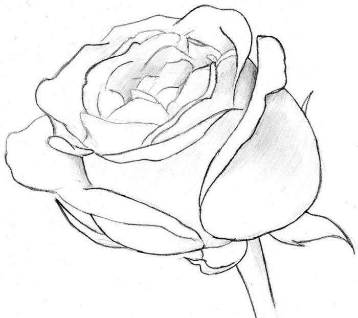 1001 Modeles Et Conseils Pour Apprendre Comment Dessiner Une Rose Dessin Rose Comment Dessiner Une Rose Croquis De Rose