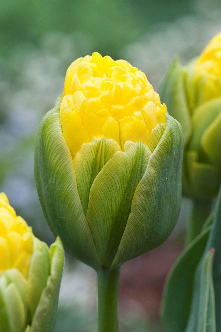 best flower power images on Pinterest Flowers garden