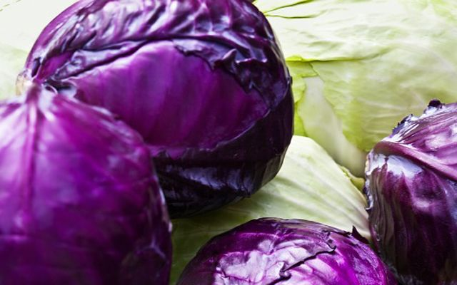 Cabbage rolls with lingonberry -   Finnish traditional dish.