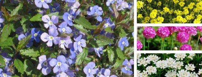 Une pépinière en ligne pour vos plantes d'extérieur !