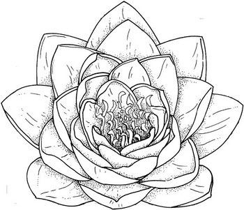 Flower Tattoo Drawings Rose