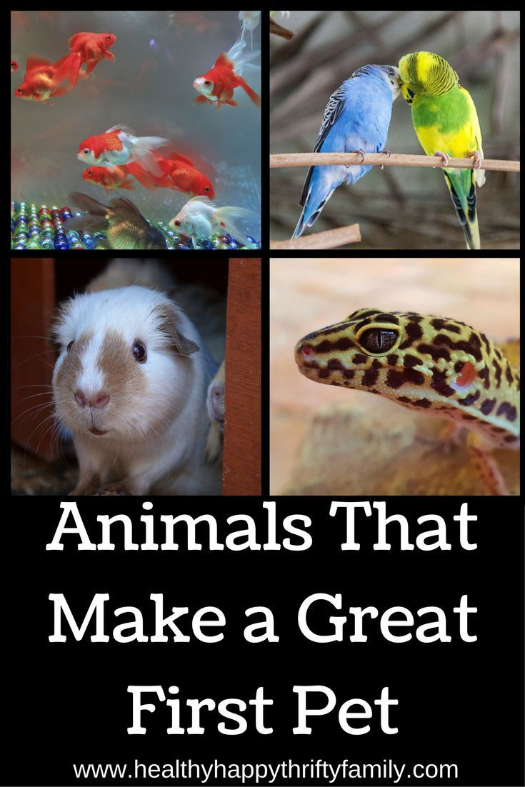 Animals That Make A Great First Pet Low Maintenance Pets Best Pets For Kids Animals For Kids