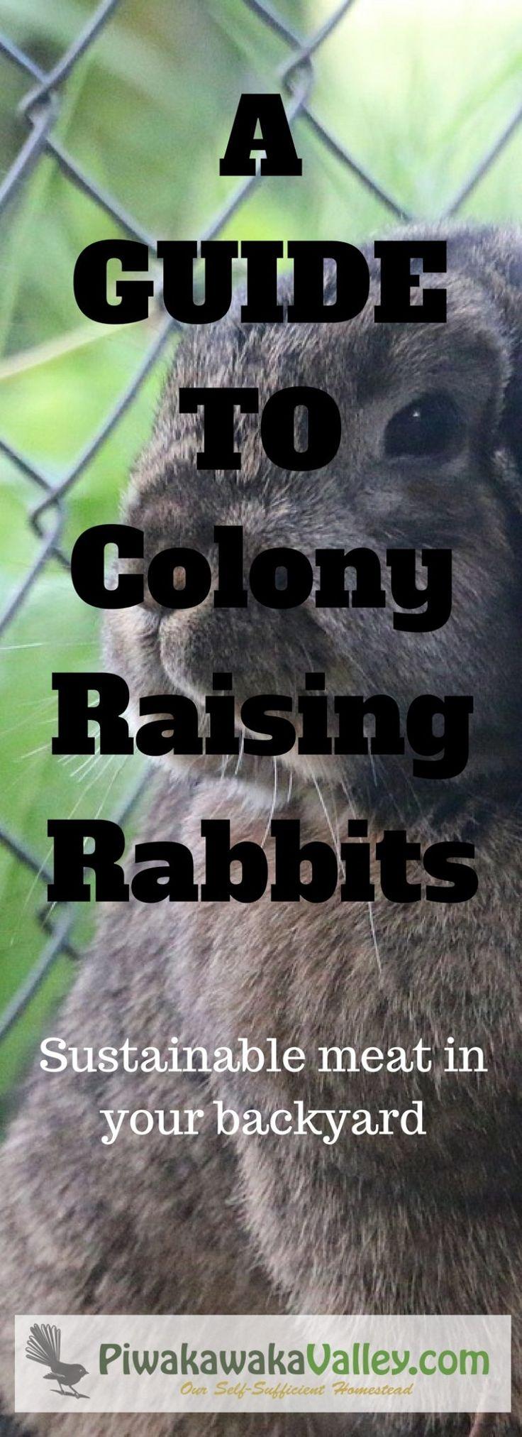 111 best rabbit production images on pinterest meat rabbits