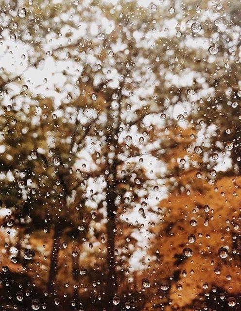 fall / autumn / rain / trees / leaves / raindrops / window pane