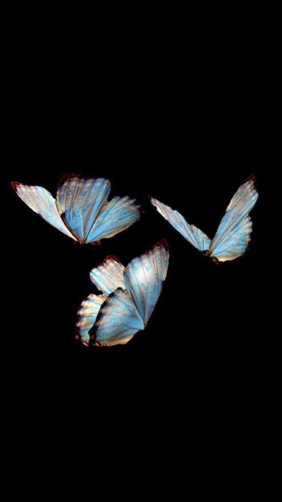 Pin On Aesthetics Background dark butterfly wallpaper