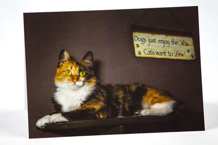"""""""One must love a cat on its own terms."""" ~Peter Gray. Buy this popular photo greeting card here: https://www.etsy.com/ca/shop/TanyaDeLeeuwPhoto?page=1#save Thanks for the <3's and repins!"""