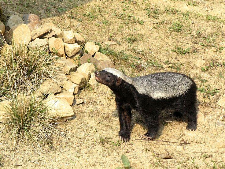 33 faits fascinants sur les prédateurs les plus redoutables de la planète