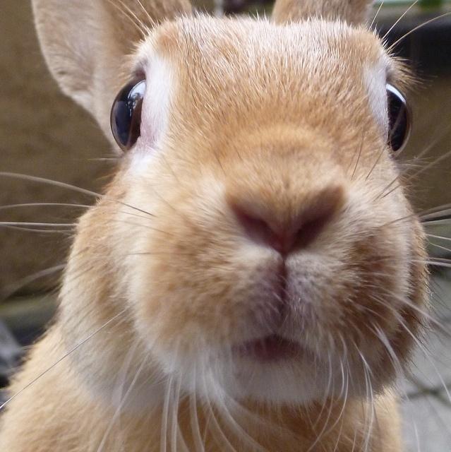 bunny rabbit sniffing around - photo #31