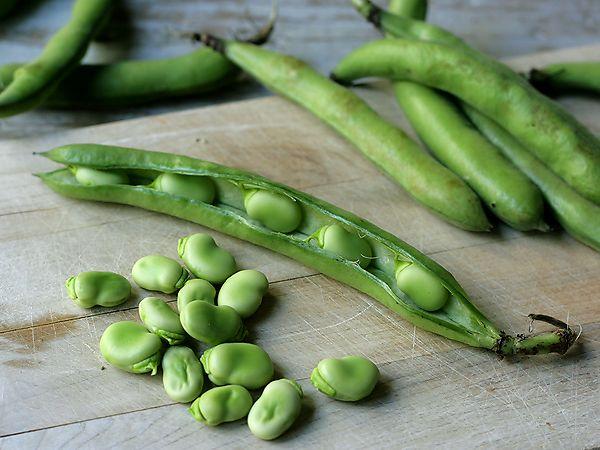 Conheça as propriedades e benefícios da fava.🌱  A fava é uma planta herbácea da família das Leguminosas, cujo talo alcança cerca de um metro de altura. Do ponto de vista botânico, o fruto é um legume formado por uma vagem carnuda de cor verde, de 15 a 25 cm de extensão, em cujo interior se acham 6 ou 7 sementes (as favas propriamente ditas). A humanidade consome favas há milênios. Possivelmente, ela seja a leguminosa cultivada há mais tempo.  Propriedades e indicações: As favas contêm…