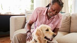 problemas de conducta en perros de edad avanzada