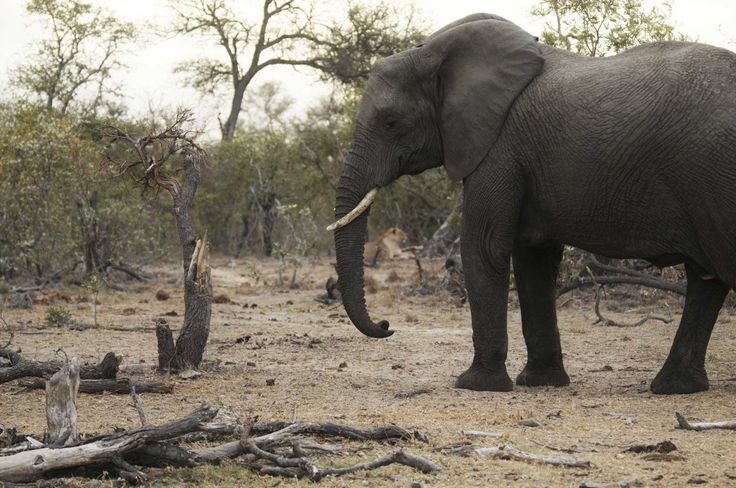 An Elephant Walks Past Our GoPro