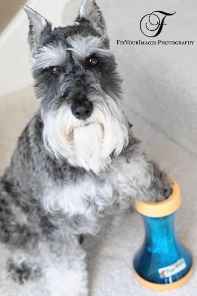 Gently and effectively clean your dog's paws with this brushless paw wash. | 28 Ingenious Things For Your Dog You Had No Idea You Needed