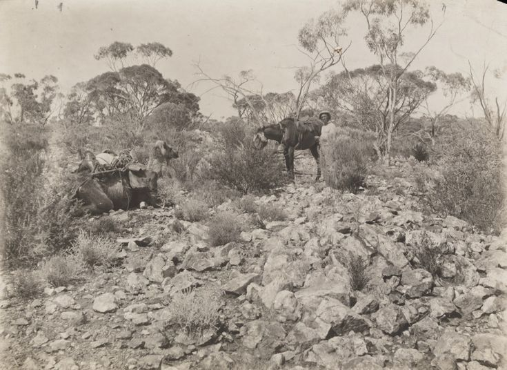 5458B/2: Bitter Rocks, Warburton Range. Prospecting expedition from Laverton to Mt Charles by W. Carr-Boyd, G.A. Drinkwater and F.M. Bankier, 4 June-20 November 1904 (Click to Start Zoom)