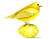 <3 I love birds. And lemons. And doom. And brains.  And maces. And muffins. With frosting.....>B)
