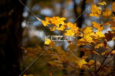 autumn leaves. - Close-up image of autumn leaves.