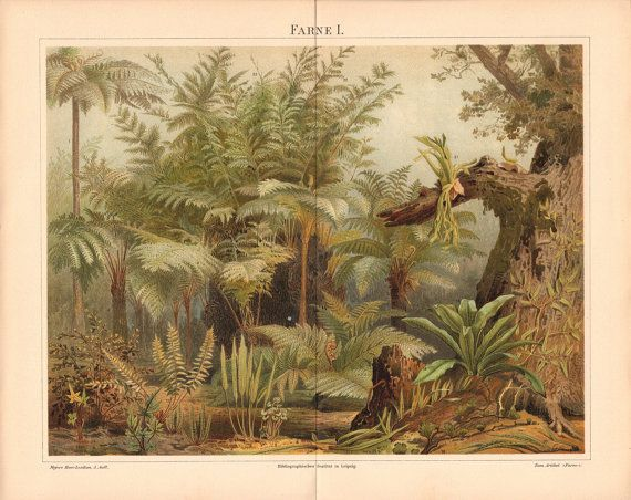 "#Antique Original #Plant #Print // 1897 // ""Ferns"" // Antique Lithograph, German, Vintage Illustration, Old nature prints"
